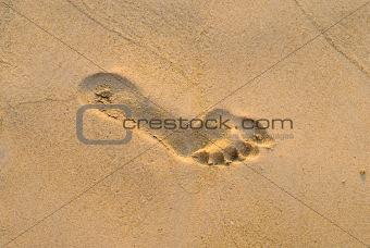 footprint 4