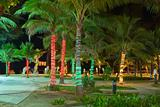 Patong beach palms by night