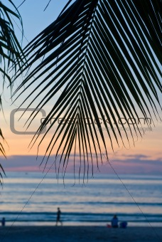 palm foliage against the sunset sky