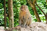 monkey sitting on the stones