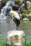 Yellow Stork Bird