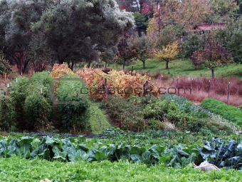 small vegetable garden in fall various plants