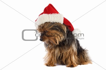Dog with Santa Claus hat