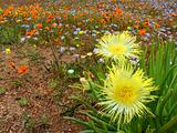 Wild flower landscape