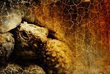 Old turtle on grunge background