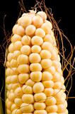 Raw corn on black