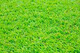Grass Background