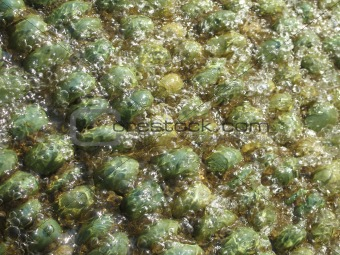 abstract green pebbles with water