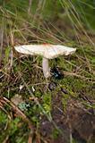 Mushroom and beetle