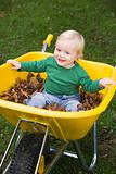 Young boy sitting in wheelbarrow