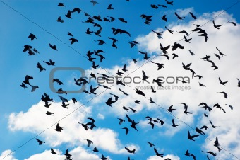 many flying pigeons on city sky background