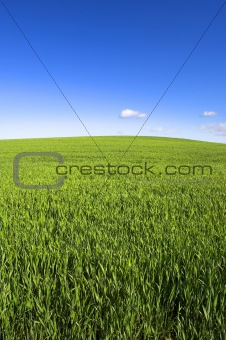 Green Field and Sky