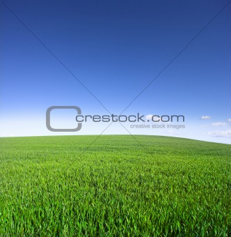 Sky and green field