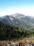 Mountain Trees3