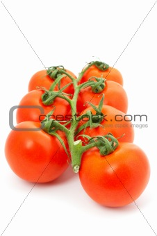Tomatoes on bunch