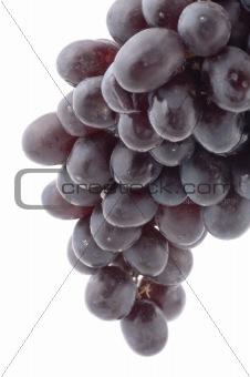 Black grapes close up