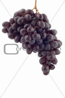 Black grapes closeup