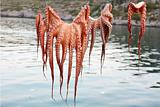 Octopus Drying on the String