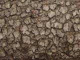 bark fragment