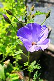 Purple Wild Flower