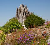 Red Blue Wildflowers Blast Stump Mount Saint Helens National Par