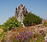 Red Blue Wildflowers Blast Stump Mount Saint Helens National Par