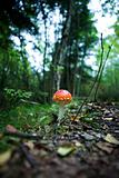 Magic Mushroom
