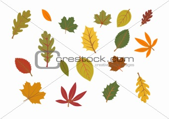 autumn leaves illustration
