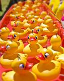lots of rubber ducks