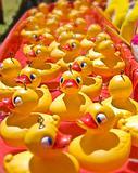 lots of rubber ducks