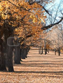 autumn in the park