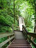 Amicalola Falls Hike