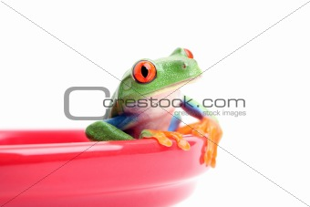 frog in bowl isolated on white