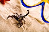 Paper background and Scorpion