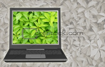 Bright image on the screen of a laptop