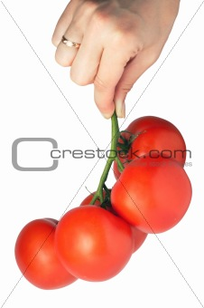 tomatoes bunch in hand