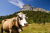 Alpe Veglia mountain pasture
