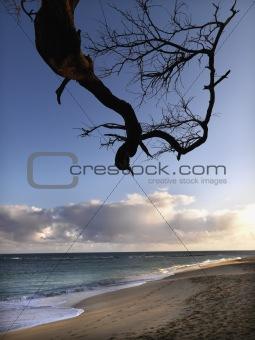Maui Hawaii beach with branch