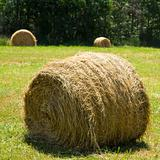 Hay bale on grass