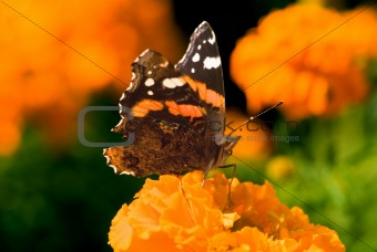Bright autumn butterfly