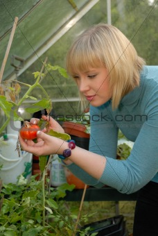 attractive girl tending tomatoes