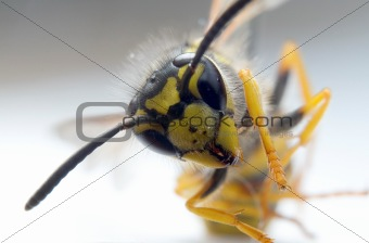Wasp on white paper