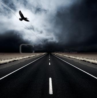 Seekor Burung sanggup terbang menembus badai topan