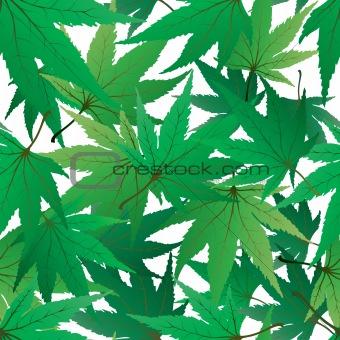 seamles maple leaves
