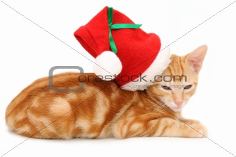 Kitten with christmas hat