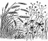 Summer grass with flowers.
