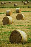Hay bales and a crow