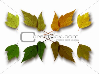 Autumn green leaf isolated on a white background