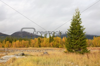 Autumn landscape with a fur-tree