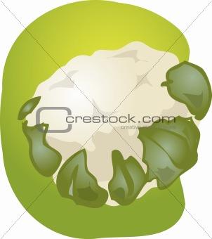 Cauliflower illustration